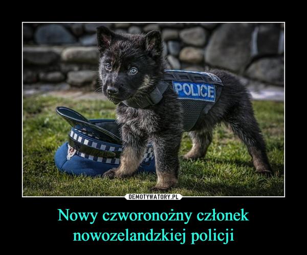 Nowy czworonożny członek nowozelandzkiej policji –