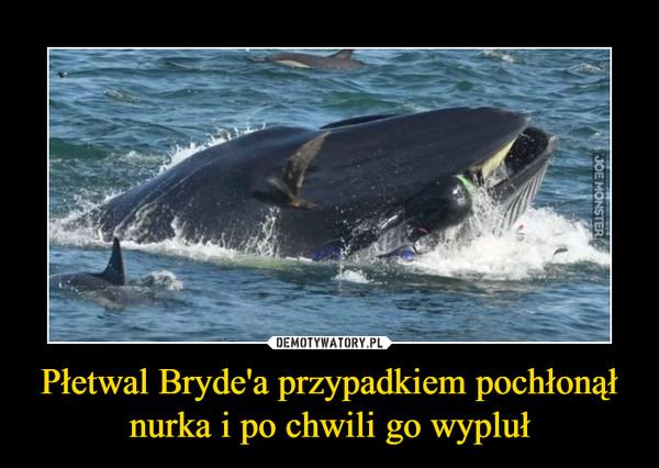 Płetwal Bryde'a przypadkiem pochłonął nurka i po chwili go wypluł –