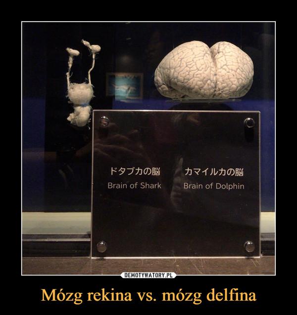 Mózg rekina vs. mózg delfina –