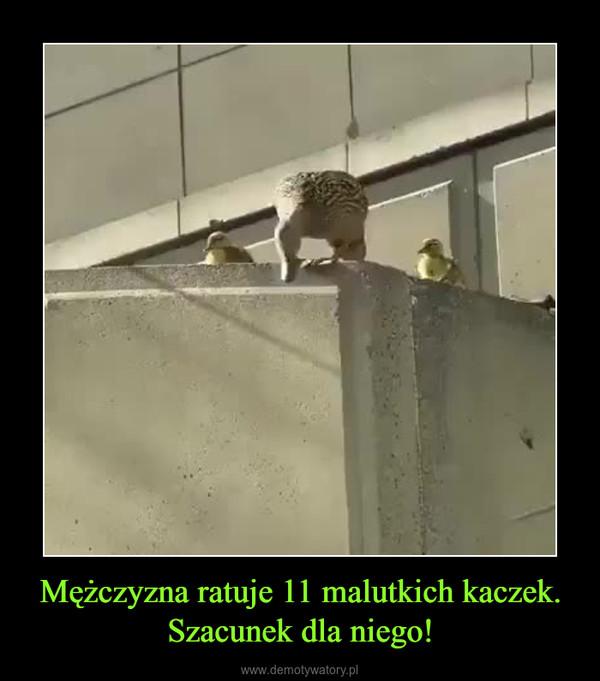 Mężczyzna ratuje 11 malutkich kaczek. Szacunek dla niego! –