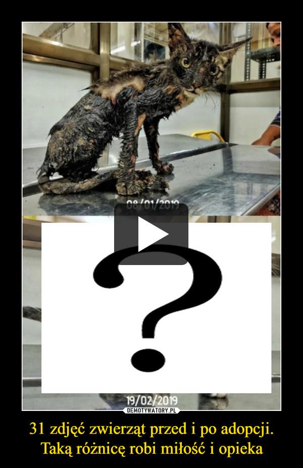 31 zdjęć zwierząt przed i po adopcji. Taką różnicę robi miłość i opieka –