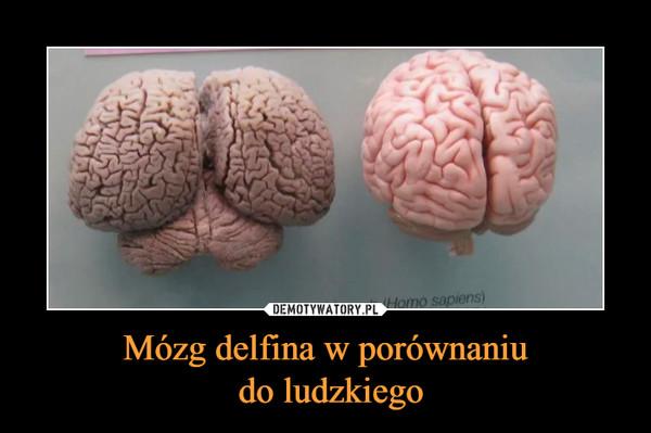 Mózg delfina w porównaniu do ludzkiego –