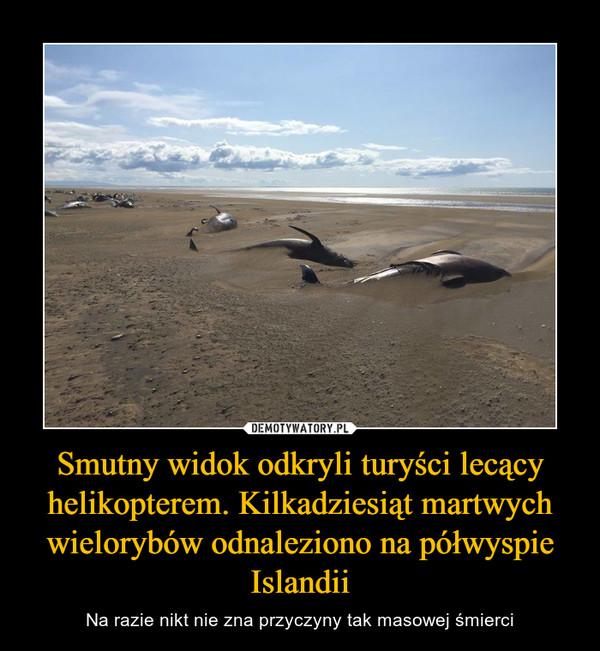 Smutny widok odkryli turyści lecący helikopterem. Kilkadziesiąt martwych wielorybów odnaleziono na półwyspie Islandii – Na razie nikt nie zna przyczyny tak masowej śmierci