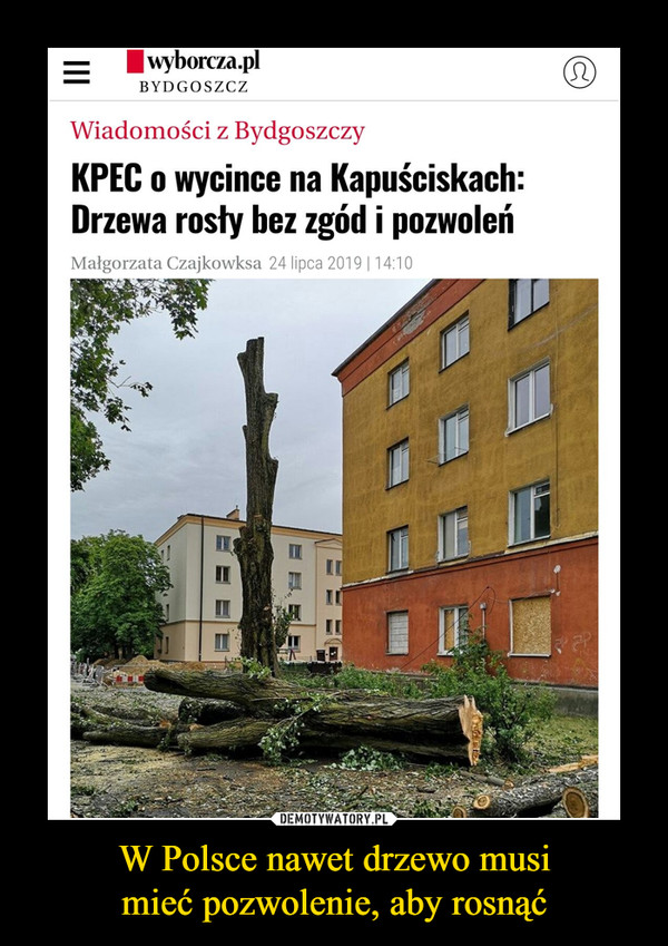 W Polsce nawet drzewo musimieć pozwolenie, aby rosnąć –