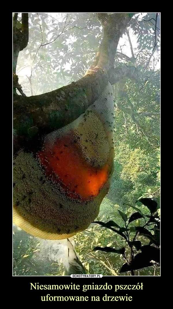Niesamowite gniazdo pszczół uformowane na drzewie –
