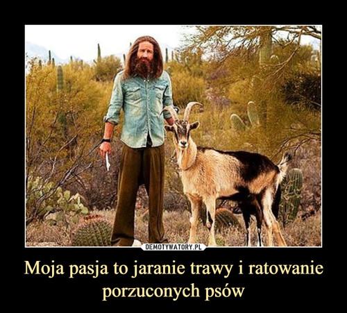Moja pasja to jaranie trawy i ratowanie porzuconych psów
