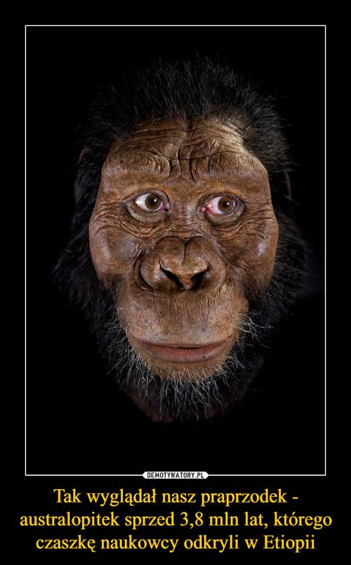 Tak wyglądał nasz praprzodek - australopitek sprzed 3,8 mln lat, którego czaszkę naukowcy odkryli w Etiopii