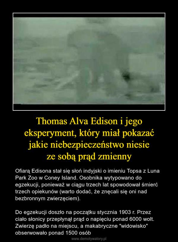 """Thomas Alva Edison i jegoeksperyment, który miał pokazaćjakie niebezpieczeństwo niesieze sobą prąd zmienny – Ofiarą Edisona stał się słoń indyjski o imieniu Topsa z Luna Park Zoo w Coney Island. Osobnika wytypowano do egzekucji, ponieważ w ciągu trzech lat spowodował śmierć trzech opiekunów (warto dodać, że znęcali się oni nad bezbronnym zwierzęciem). Do egzekucji doszło na początku stycznia 1903 r. Przez ciało słonicy przepłynął prąd o napięciu ponad 6000 wolt. Zwierzę padło na miejscu, a makabryczne """"widowisko"""" obserwowało ponad 1500 osób"""