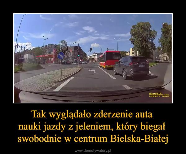 Tak wyglądało zderzenie auta nauki jazdy z jeleniem, który biegał swobodnie w centrum Bielska-Białej –