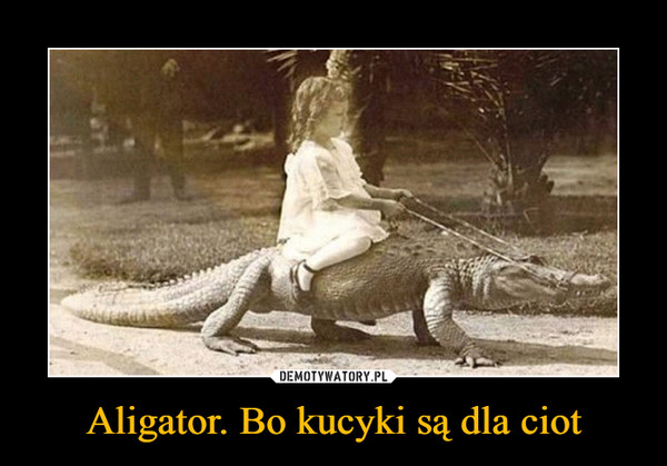 Aligator. Bo kucyki są dla ciot –