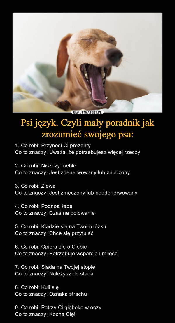 Psi język. Czyli mały poradnik jak zrozumieć swojego psa: – 1. Co robi: Przynosi Ci prezentyCo to znaczy: Uważa, że potrzebujesz więcej rzeczy2. Co robi: Niszczy mebleCo to znaczy: Jest zdenerwowany lub znudzony3. Co robi: ZiewaCo to znaczy: Jest zmęczony lub poddenerwowany4. Co robi: Podnosi łapęCo to znaczy: Czas na polowanie5. Co robi: Kładzie się na Twoim łóżkuCo to znaczy: Chce się przytulać6. Co robi: Opiera się o CiebieCo to znaczy: Potrzebuje wsparcia i miłości7. Co robi: Siada na Twojej stopieCo to znaczy: Należysz do stada8. Co robi: Kuli sięCo to znaczy: Oznaka strachu9. Co robi: Patrzy Ci głęboko w oczyCo to znaczy: Kocha Cię!