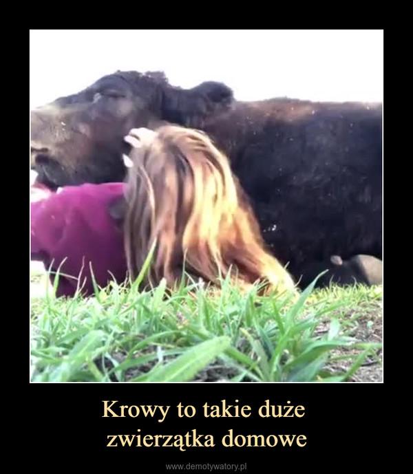 Krowy to takie duże zwierzątka domowe –