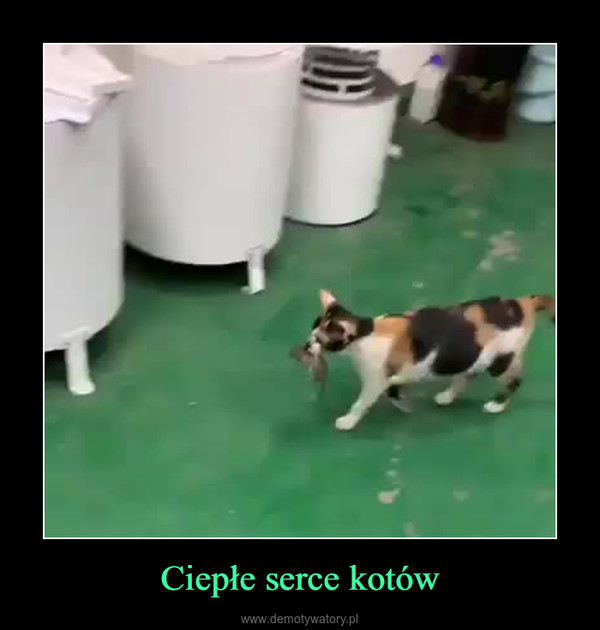 Ciepłe serce kotów –