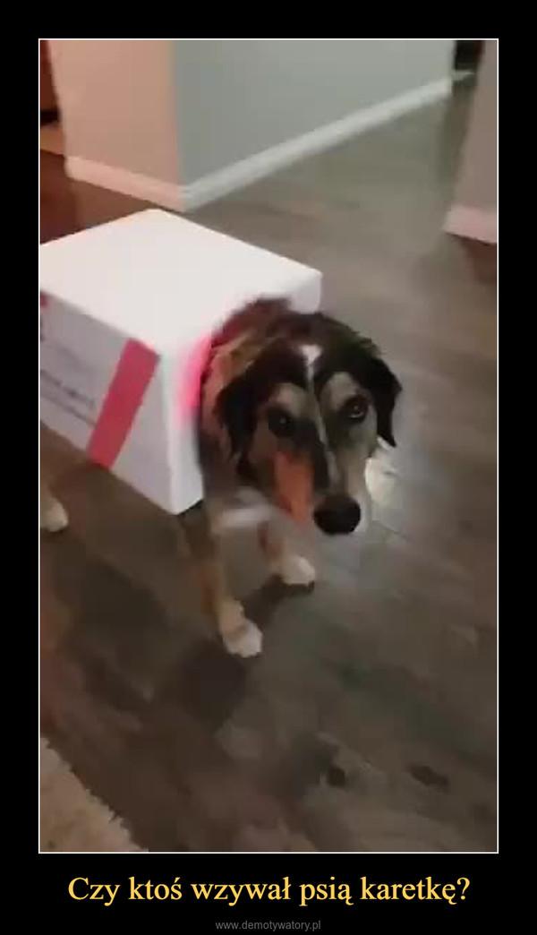 Czy ktoś wzywał psią karetkę? –