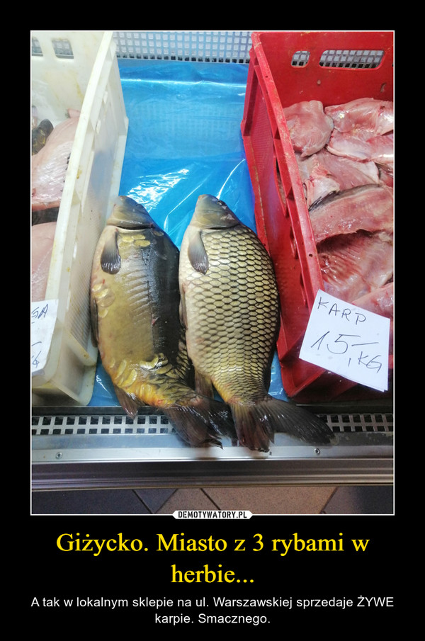 Giżycko. Miasto z 3 rybami w herbie... – A tak w lokalnym sklepie na ul. Warszawskiej sprzedaje ŻYWE karpie. Smacznego.