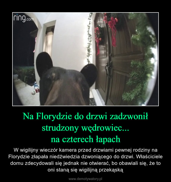 Na Florydzie do drzwi zadzwonił strudzony wędrowiec...na czterech łapach – W wigilijny wieczór kamera przed drzwiami pewnej rodziny na Florydzie złapała niedźwiedzia dzwoniącego do drzwi. Właściciele domu zdecydowali się jednak nie otwierać, bo obawiali się, że to oni staną się wigilijną przekąską