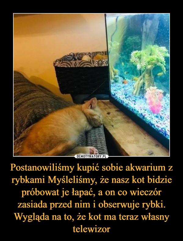 Postanowiliśmy kupić sobie akwarium z rybkami Myśleliśmy, że nasz kot bidzie próbowat je łapać, a on co wieczór zasiada przed nim i obserwuje rybki. Wygląda na to, że kot ma teraz własny telewizor –
