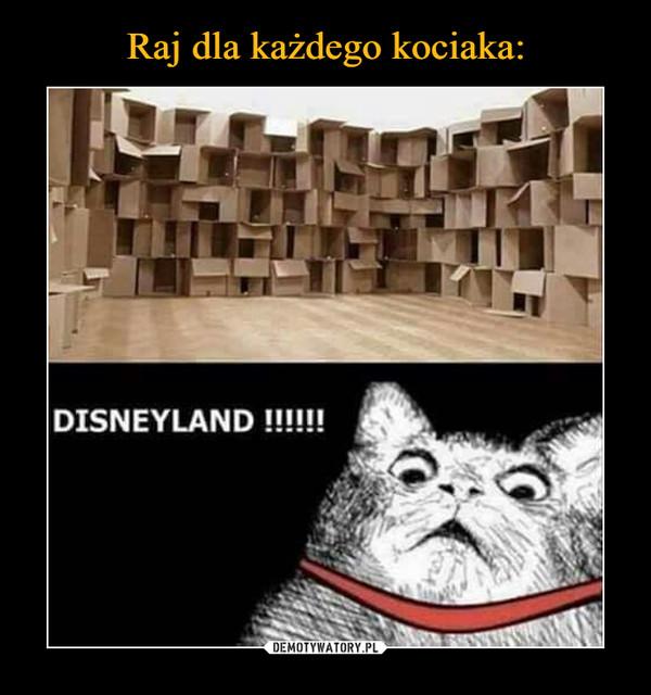 –  DISNEYLAND!!!!!