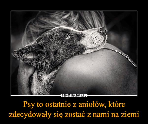 Psy to ostatnie z aniołów, które zdecydowały się zostać z nami na ziemi –