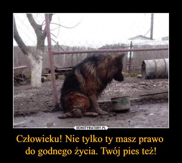 Człowieku! Nie tylko ty masz prawo do godnego życia. Twój pies też! –