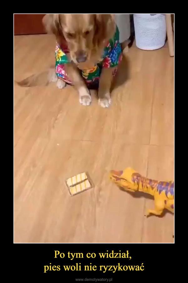 Po tym co widział, pies woli nie ryzykować –