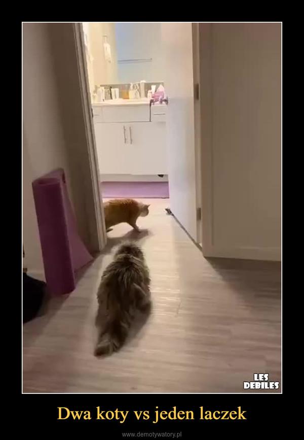 Dwa koty vs jeden laczek –