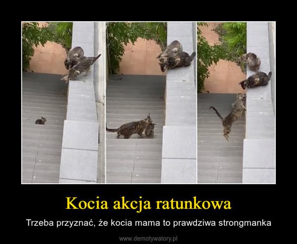 Kocia akcja ratunkowa – Trzeba przyznać, że kocia mama to prawdziwa strongmanka
