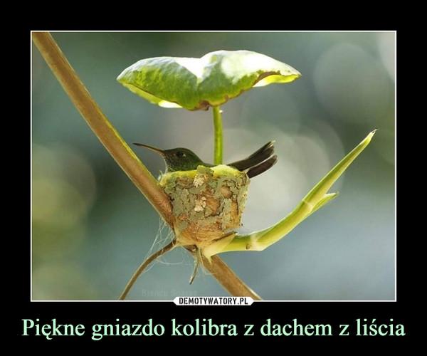 Piękne gniazdo kolibra z dachem z liścia –