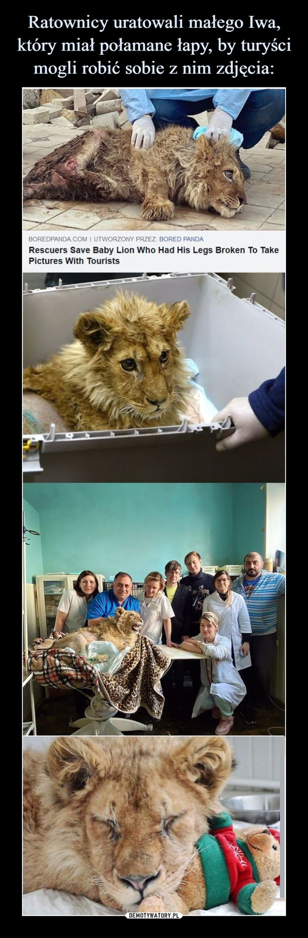 –  Rescuers save baby lion who had his legs broken to take pictures with tourists