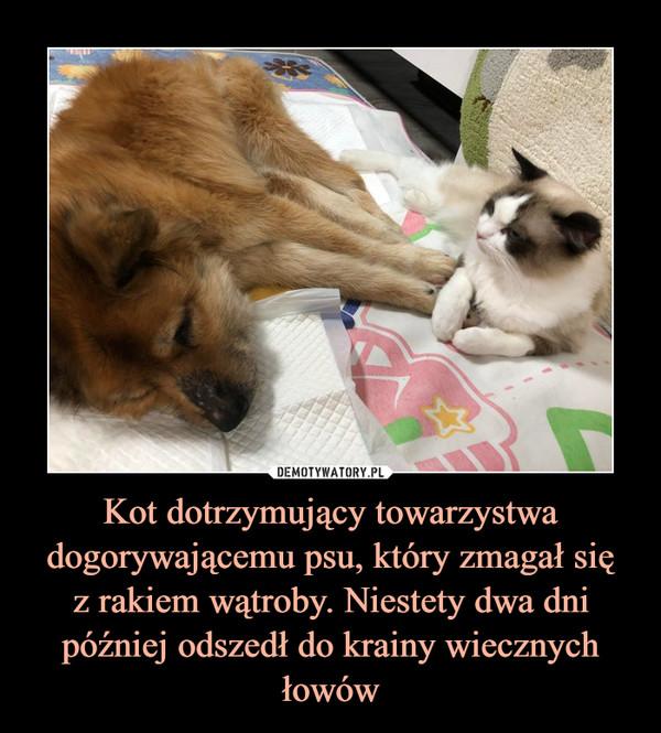 Kot dotrzymujący towarzystwa dogorywającemu psu, który zmagał sięz rakiem wątroby. Niestety dwa dni później odszedł do krainy wiecznych łowów –