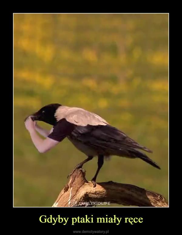 Gdyby ptaki miały ręce –