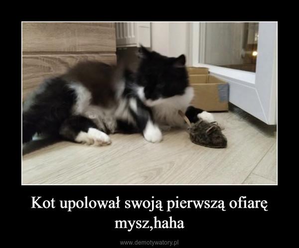 Kot upolował swoją pierwszą ofiarę mysz,haha –