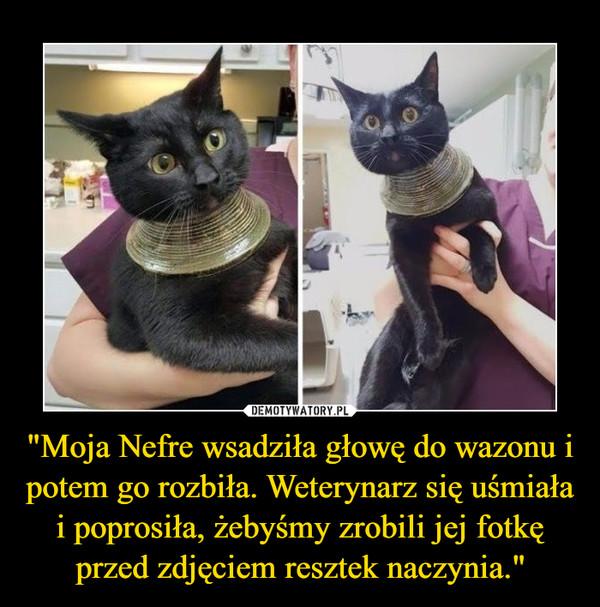 """""""Moja Nefre wsadziła głowę do wazonu i potem go rozbiła. Weterynarz się uśmiała i poprosiła, żebyśmy zrobili jej fotkę przed zdjęciem resztek naczynia."""" –"""