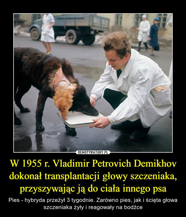 W 1955 r. Vladimir Petrovich Demikhov dokonał transplantacji głowy szczeniaka, przyszywając ją do ciała innego psa – Pies - hybryda przeżył 3 tygodnie. Zarówno pies, jak i ścięta głowa szczeniaka żyły i reagowały na bodźce