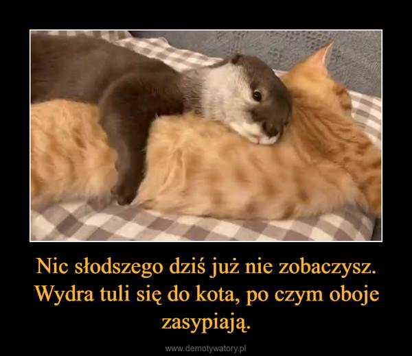 Nic słodszego dziś już nie zobaczysz. Wydra tuli się do kota, po czym oboje zasypiają. –