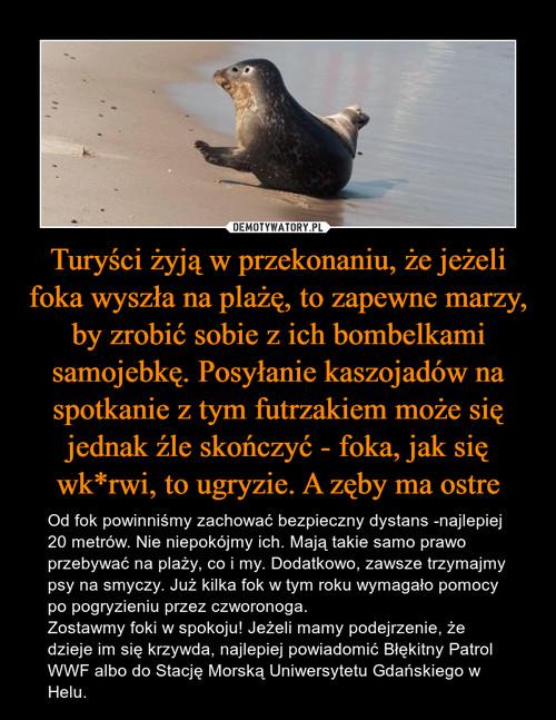 Turyści żyją w przekonaniu, że jeżeli foka wyszła na plażę, to zapewne marzy, by zrobić sobie z ich bombelkami samojebkę. Posyłanie kaszojadów na spotkanie z tym futrzakiem może się jednak źle skończyć - foka, jak się wk*rwi, to ugryzie. A zęby ma ostre