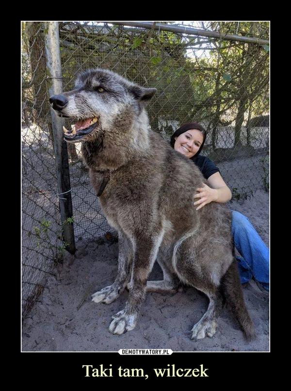Taki tam, wilczek –