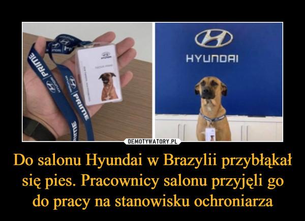 Do salonu Hyundai w Brazylii przybłąkał się pies. Pracownicy salonu przyjęli go do pracy na stanowisku ochroniarza –
