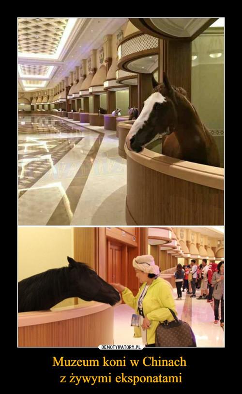 Muzeum koni w Chinach  z żywymi eksponatami