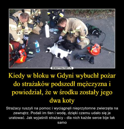 Kiedy w bloku w Gdyni wybuchł pożar do strażaków podszedł mężczyzna i powiedział, że w środku zostały jego dwa koty