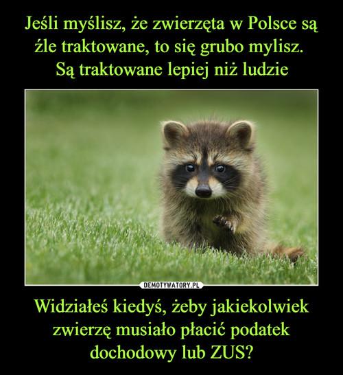 Jeśli myślisz, że zwierzęta w Polsce są źle traktowane, to się grubo mylisz.  Są traktowane lepiej niż ludzie Widziałeś kiedyś, żeby jakiekolwiek zwierzę musiało płacić podatek dochodowy lub ZUS?