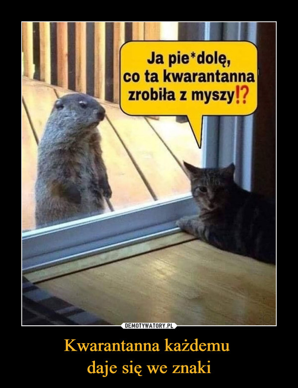 Kwarantanna każdemu daje się we znaki –  Ja pie*dolę,co ta kwarantannazrobiła z myszy!?