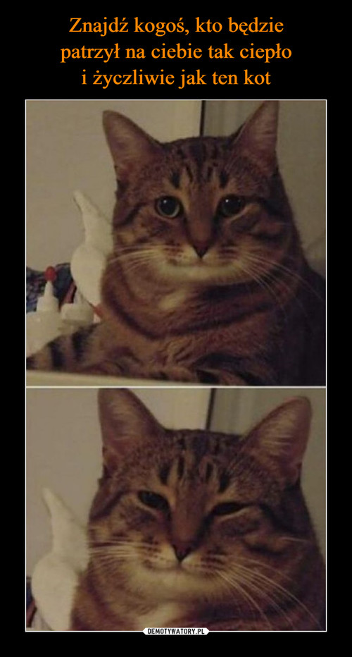 Znajdź kogoś, kto będzie patrzył na ciebie tak ciepło i życzliwie jak ten kot