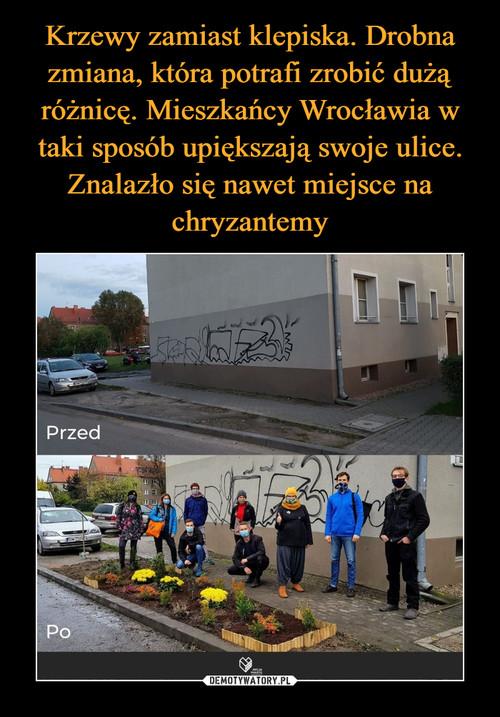 Krzewy zamiast klepiska. Drobna zmiana, która potrafi zrobić dużą różnicę. Mieszkańcy Wrocławia w taki sposób upiększają swoje ulice. Znalazło się nawet miejsce na chryzantemy