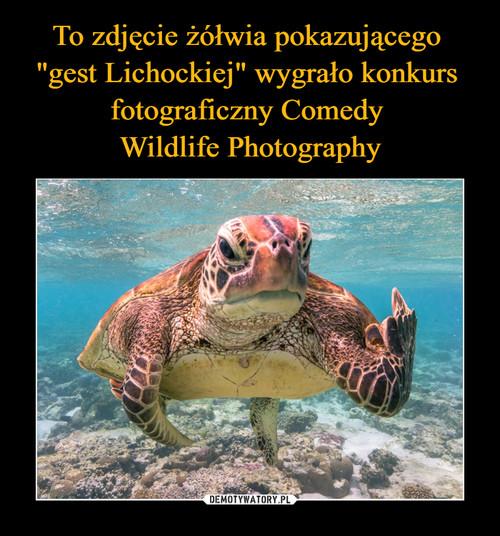 """To zdjęcie żółwia pokazującego  """"gest Lichockiej"""" wygrało konkurs  fotograficzny Comedy  Wildlife Photography"""