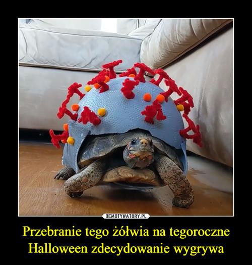 Przebranie tego żółwia na tegoroczne Halloween zdecydowanie wygrywa