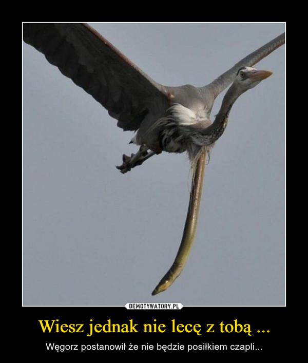 Wiesz jednak nie lecę z tobą ... – Węgorz postanowił że nie będzie posiłkiem czapli...