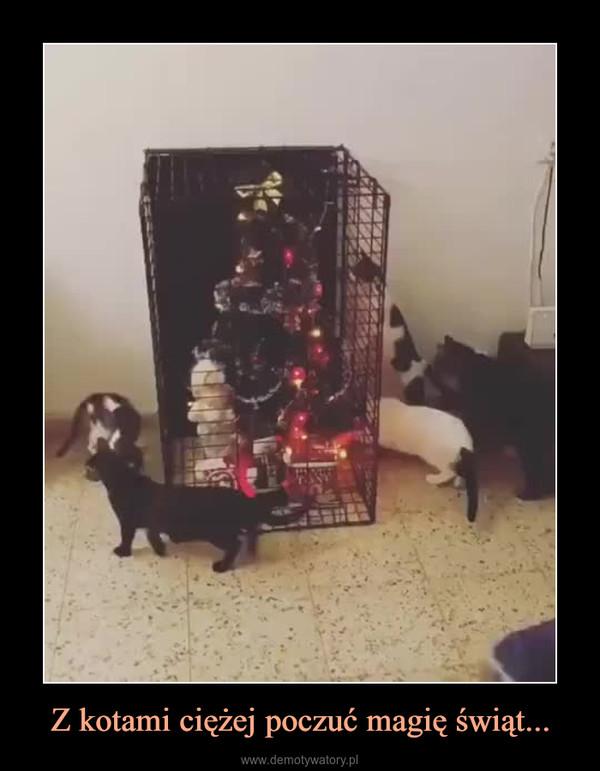 Z kotami ciężej poczuć magię świąt... –