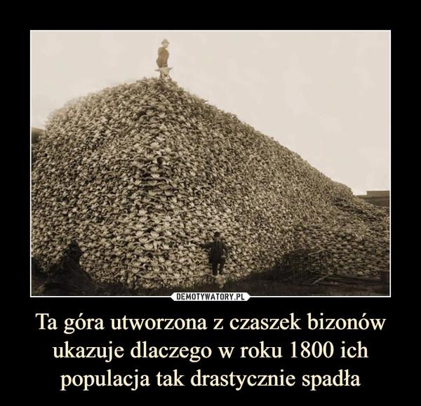 Ta góra utworzona z czaszek bizonów ukazuje dlaczego w roku 1800 ich populacja tak drastycznie spadła –