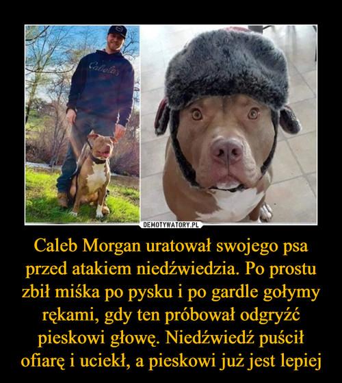 Caleb Morgan uratował swojego psa przed atakiem niedźwiedzia. Po prostu zbił miśka po pysku i po gardle gołymy rękami, gdy ten próbował odgryźć pieskowi głowę. Niedźwiedź puścił ofiarę i uciekł, a pieskowi już jest lepiej